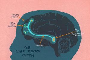 brain-reward-system-1_custom-7956a51d432caa0dbca938fc8069ceccd6e88fd6-s900-c85